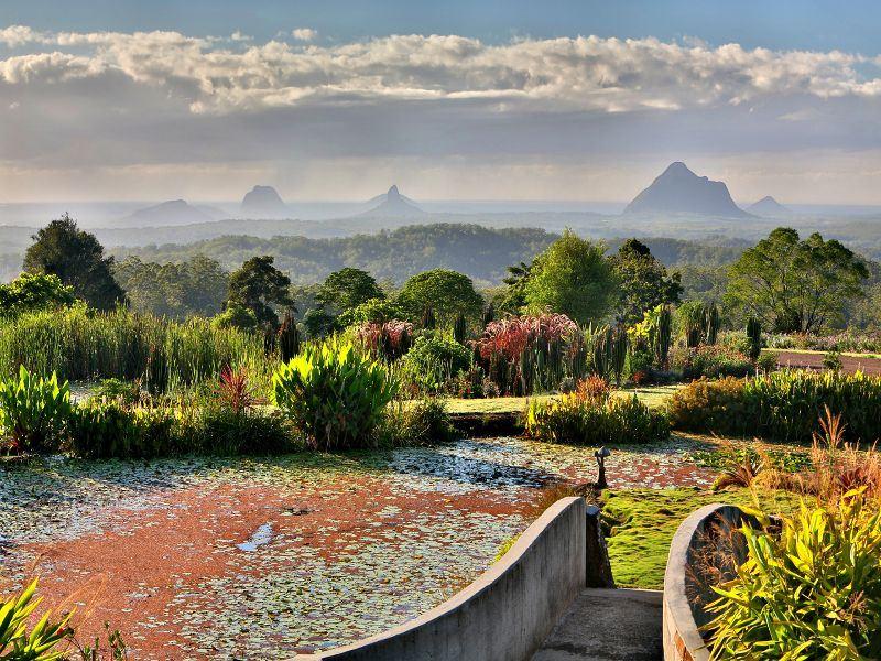 maleny botanic gardens sunshine coast   tourism images