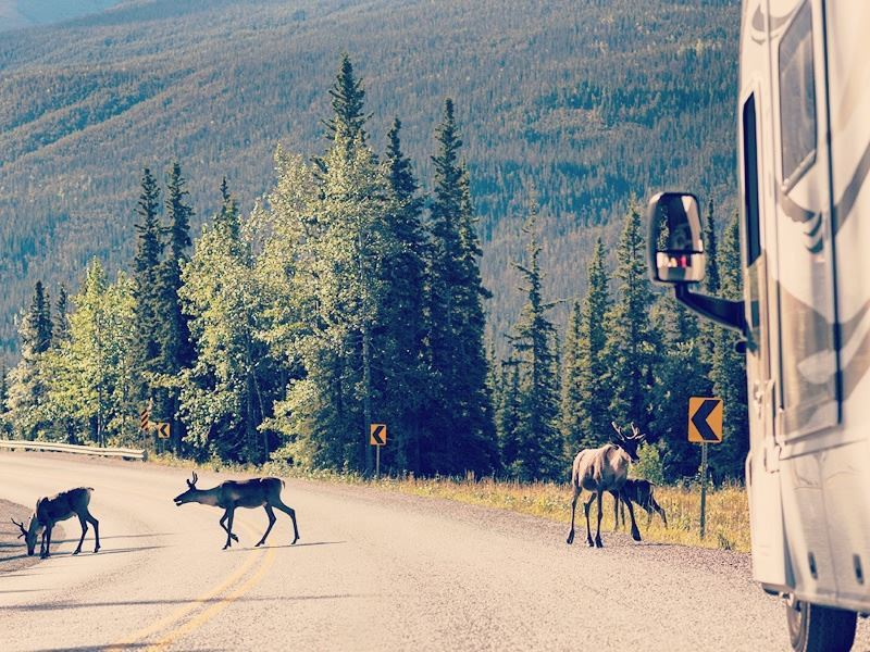 motorhome road trip along the alaska highway in stone mountain provincial park