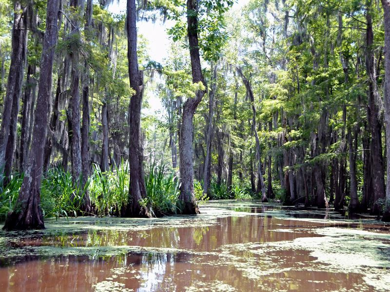 pearl river swamp louisiana