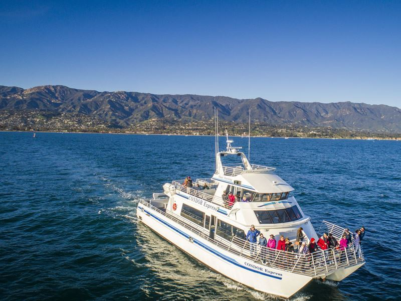 santa barbara whale watching visit california david collier