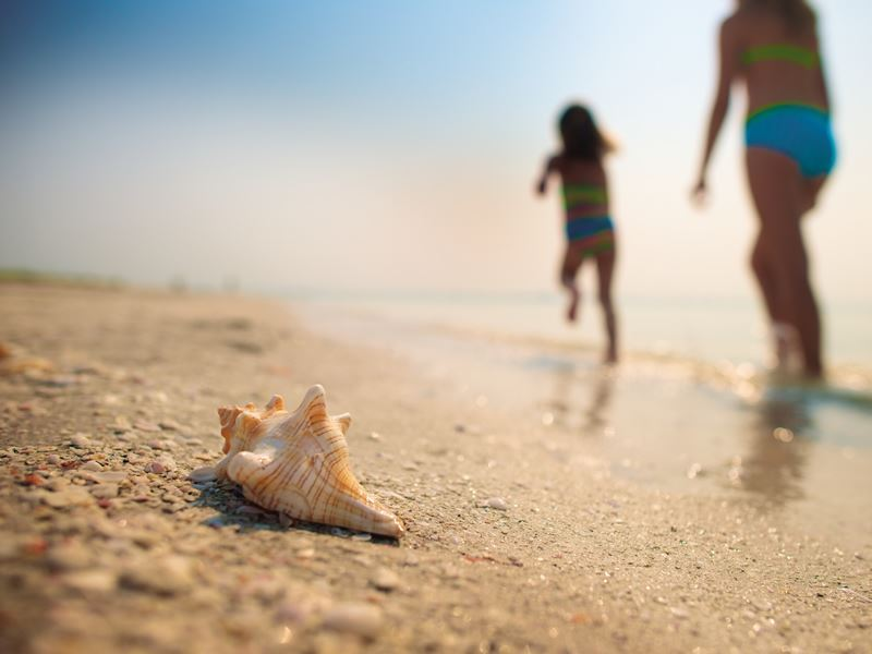 shells on the beach in fort myers