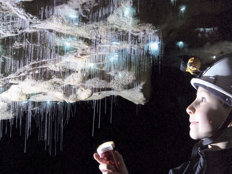 spellbound a closer look at glowworms