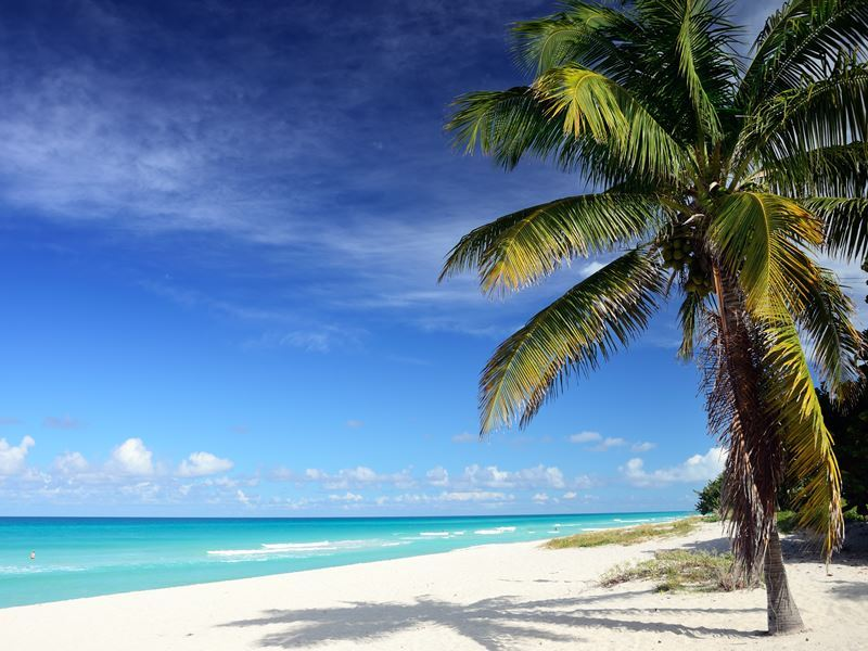varadero beach palm cuba