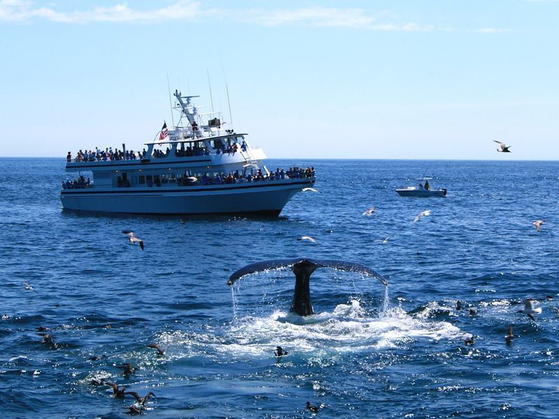 whale watching provincetown
