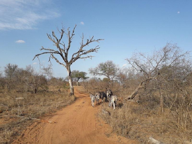 zebra on game drive cheryl
